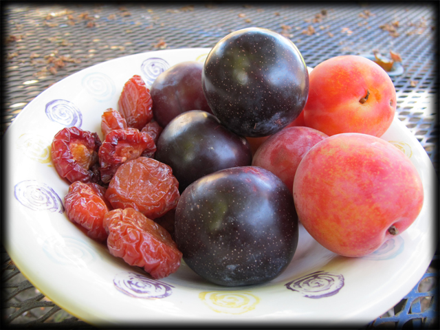 Bowl of Stone Fruit (fresh and dried)